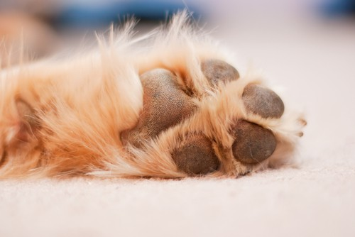 How To Remove Carpet Stains From Pets?